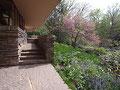 アメリカ建築の旅17 フランク・ロイド・ライト 落水荘