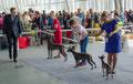 Сравнение на лучшую собаку выставки