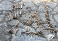 Lots of animal bones in the cave.