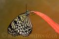 Schmetterlinge & Insekte