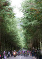 2008 Cycle Road Race at Utsunomiya Forest Park