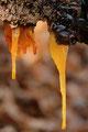 Eiszapfen an altem Baumstamm
