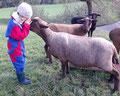 Die Schafe sind sehr an die Kinder gewöhnt