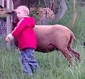 Michi wird gerade vom Schaf getröstet, als er kurz vorher in die Brombeeren gefasst hat