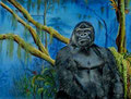 Flachlandgorilla Kisoro,Pastell 50x60cm,(c)D.Saul 2012, Ref. M.Walti
