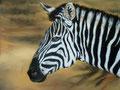 Grant-Zebra,Pastell 40x50cm,(c)D.Saul 2013; Ref.Foto: (c)M.Walti,Schweiz
