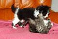 le jeu des chaton