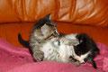 le jeu chez le chaton