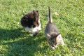 La course des chatons