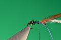 recidere l'eccedenza e bloccare un hackle ed un segmento di seta di colore viola