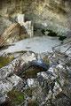 Grotta Sant'Angelo, vasca per la raccolta dell'acqua da stillicidio