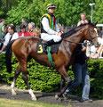 Earl of Winds im Führring mit seinem Jockey Jozef Bojko bei seinem Start in Krefeld