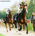 Earl of Winds beim Audgalopp beim zweiten Saisonstart in Bremen.© Frank Nolting