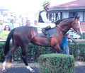 Earl of Winds im Führring unter Jockey Jozef Bojko