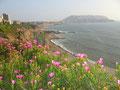 """Die """"Costa Verde"""": an der sogenannten """"Grünen Küste"""" von Lima lebt, wer es sich leisten kann. (Foto: Bernd Pullig)"""