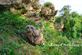 Uhu: Junger Uhu im Schmidatal