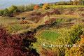 Wagram: Herbstlandschaft bei Stettenhof