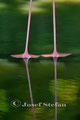 Flamingofüße