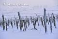 Schmidatal: Winterlicher Weingarten