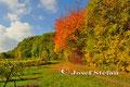 Schmidatal: Herbstlandschaft bei Maissau