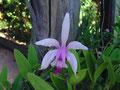 Überall am Wegesrand wachsen die schönsten Blumen.