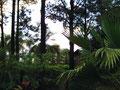 Vegetation im Überfluss