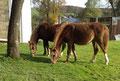 Ramonshof Trixie und Ramonshof Sally
