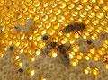 die Biene schlüpft...
