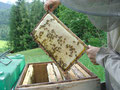 reifer Honig