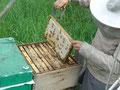 Waben voll mit reifen Honig