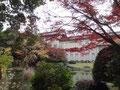 国立博物館 庭園 池