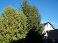 ...ziemlich hoche Bäume!