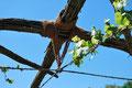 Wenn eine Lage festgebunden ist, wird der alte Kabelbinder durch einen neuen ersetzt.