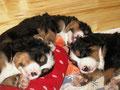 Auch als Hund möchte man gemütlich schlafen!