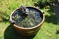 Gargoyle Wasserspeier im Fass