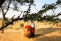 Dornen -  Kamele essen sie, ohne mit der Wimper zu zucken (Thar-Wüste)