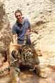 im Tigertempel