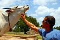 überall Kühe - ein Paradies für Mäse