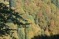 Herbst im Appenzeller Land (Foto: E. Klein)