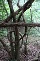 Waldspirale im Siebengebirge (Foto: E. Klein)