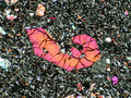 Angelöster Olivin-Kristall unter gekreuzten Polarisatoren (Foto: H.-P. Schertl, Bochum)