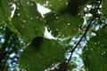 Blätter in den Oberahrer Bergen  (Foto: E. Klein)