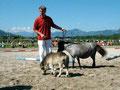 2006.07.02 Zuchtschau West in Tirol Siegerfohlen der Shetlandponys und Reservesieger über alle Rassen