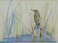 In het gras, potlood en inkt op papier, ingelijst, prijs 215,00e (incl. lijst)