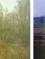 Sans titre    2013   , 30X40 cm, collage numérique