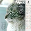 ノラネコ カレンダー 2014-5月