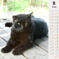 ノラネコ カレンダー 2014-7月