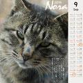ノラネコ カレンダー 2014-8月