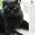 ノラネコ カレンダー 2014-4月