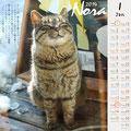 ノラネコ カレンダー 2014-1月